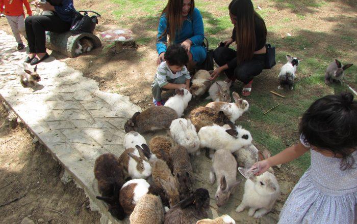 Rabbit Farm at Kundasang