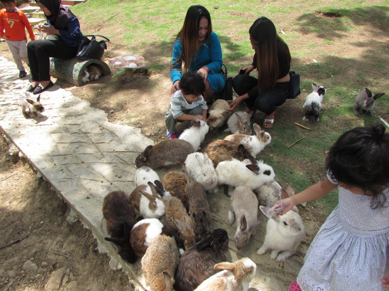Rabbit Farm at Kundasang