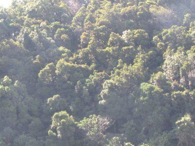 Thick jungle of Dinawan Island, Hornbills sanctuary of Dinawan Island