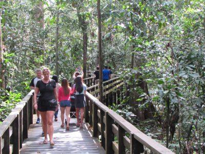 Jungle walkway Sepilok orangutan sanctuary