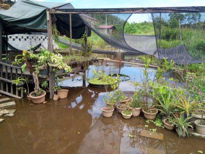 Wetland surrounding Borneo Eco House