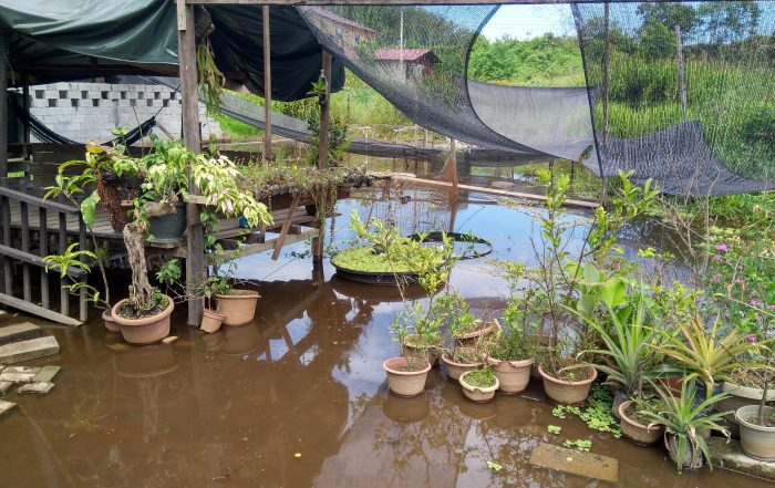 Wetland surrounding Borneo Eco House