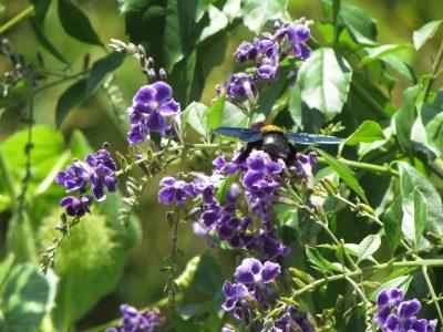 Wild flowers around Borneo Eco House